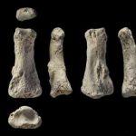 人类何时离开非洲?让88000年前的手指骨告诉你